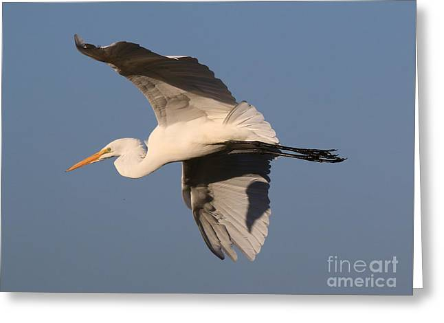 Hunting Bird Greeting Cards - Gliding With Style Greeting Card by Craig Corwin