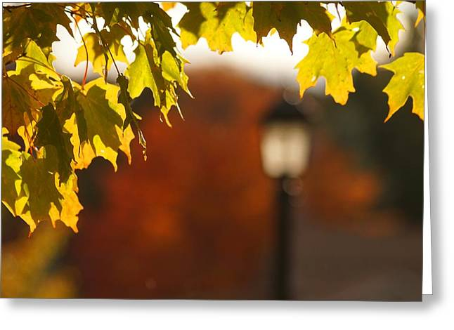 Glimpse Of Autumn Greeting Card by Aimelle