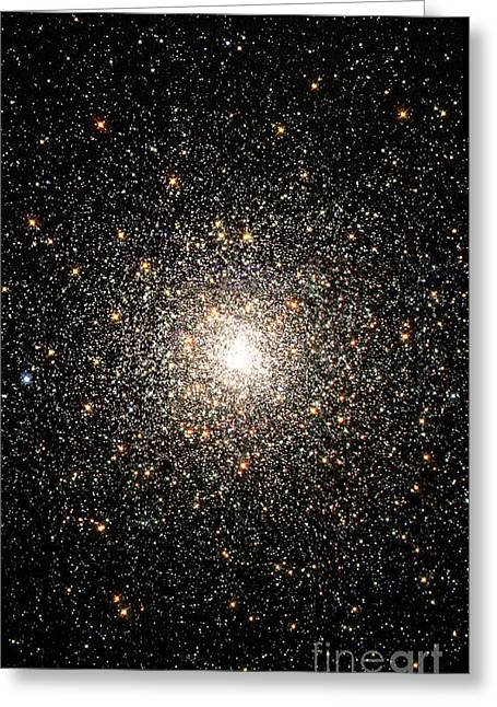 Constellations Greeting Cards - Globular Star Cluster Ngc 6093 Greeting Card by Stocktrek Images