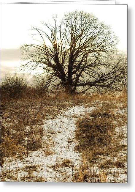 Snow Tree Prints Digital Greeting Cards - Gloomy Winter Tree  Greeting Card by Randy Steele