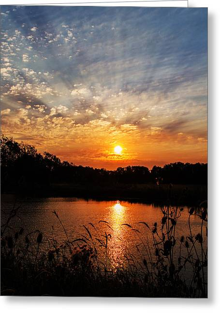 Wildlife Refuge. Greeting Cards - Glorious Greeting Card by Angie Vogel