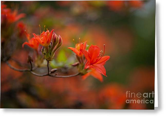 Glorious Blooms Greeting Card by Mike Reid