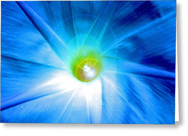 Star Greeting Cards - Glorious Explosion Greeting Card by Jean Hall