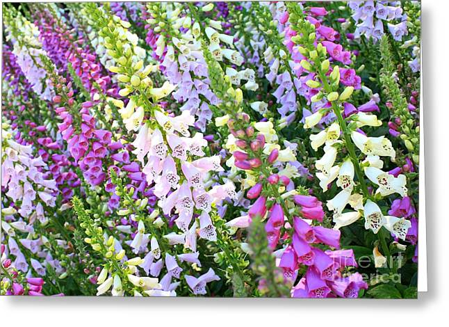 Glorious Foxgloves Greeting Card by Carol Groenen