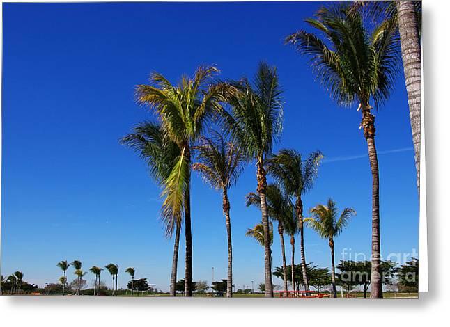 Glorious Palms Greeting Card by Zalman Latzkovich