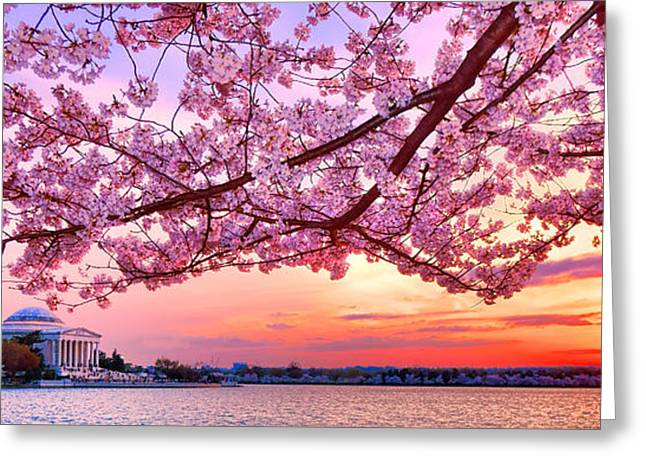 Glorious Sunset Over Cherry Tree At The Jefferson Memorial  Greeting Card by Olivier Le Queinec