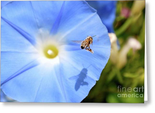 Ken Williams Greeting Cards - Glory Bee Greeting Card by Ken Williams