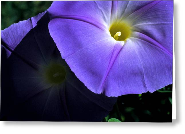 Morning Glory Art Greeting Cards - Glory in the Morning Greeting Card by Jerry McElroy