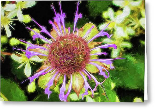 Glow Mountain Wildflower Greeting Card by Cindy Archbell