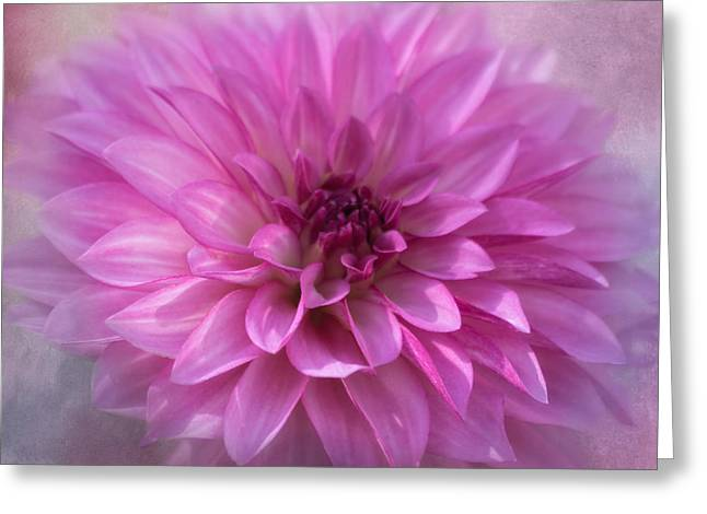 Kim Photographs Greeting Cards - Glowing Dahlia Greeting Card by Kim Hojnacki