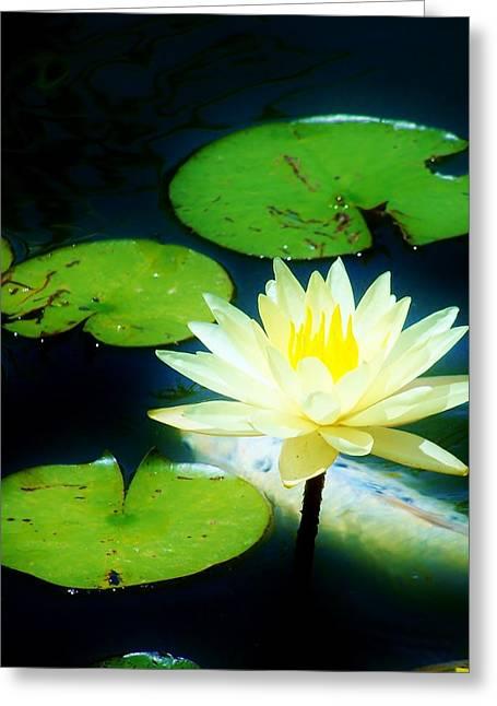 Best Sellers -  - Nature Center Pond Greeting Cards - Glowing Lotus Greeting Card by Rhonda DePalma