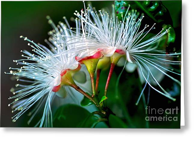 Glowing Needles Greeting Card by Kaye Menner