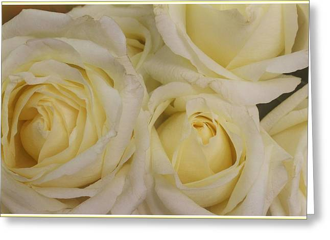 Botanical Greeting Cards - Glowing Peace Roses Greeting Card by  Photographic Art and Design by Dora Sofia Caputo