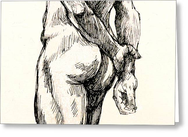 Nude Drawings Drawings Greeting Cards - Gluteus Maximus Greeting Card by Roz McQuillan