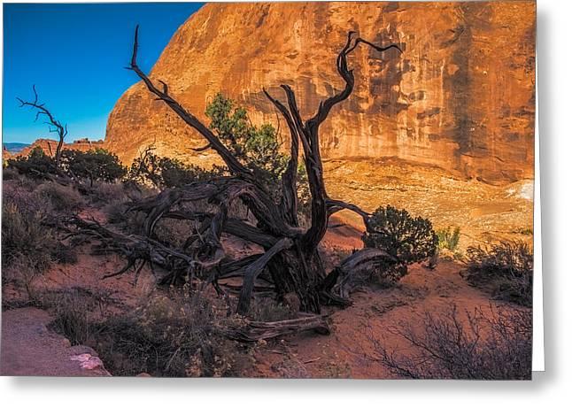 Utah Artwork Greeting Cards - Gnarled Cedar Tree Greeting Card by Paul Freidlund