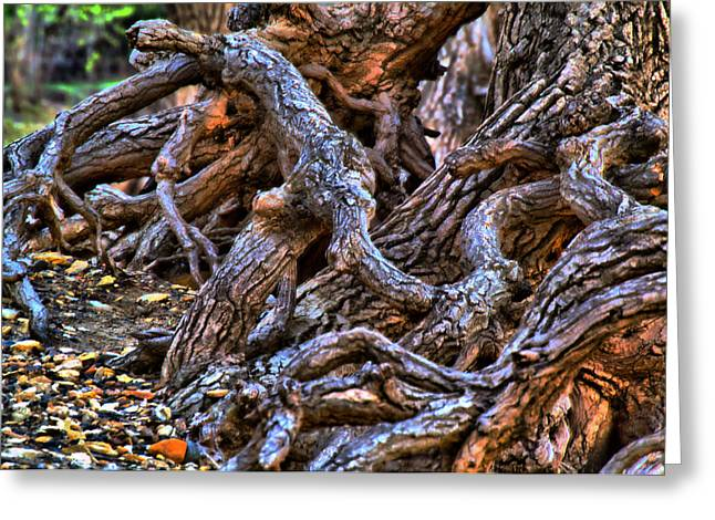 Tree Roots Pyrography Greeting Cards - Gnarled Greeting Card by Eric Wait
