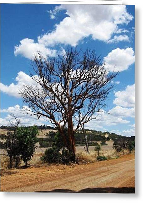 Gnarly Greeting Cards - Gnarly Northam Tree Greeting Card by Vickie Roy-Sneddon