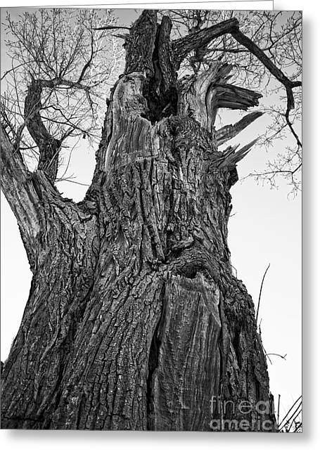 Gnarly Old Tree Greeting Card by Edward Fielding