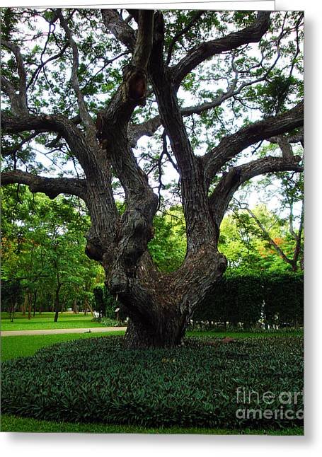 Gnarly Greeting Cards - Gnarly Tree  Greeting Card by Kim Magee and Crystal Mclean  Aunt and Niece Photography