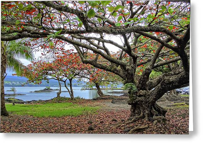 Gnarly Trees Of South Hilo Bay - Hawaii Greeting Card by Daniel Hagerman