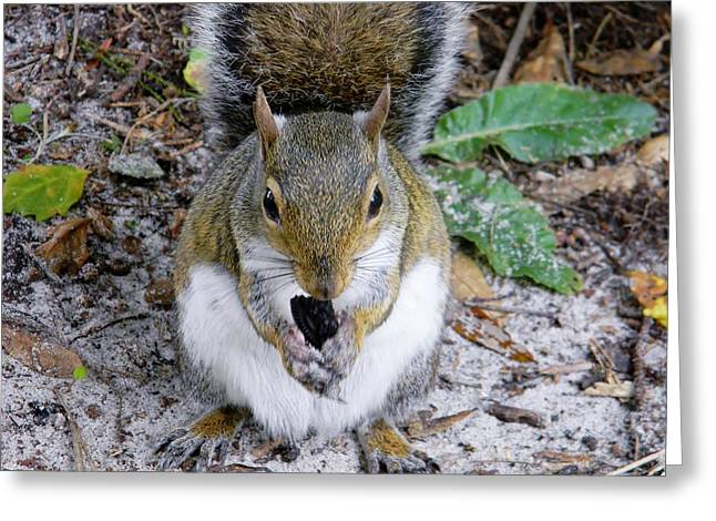 Gnawing Greeting Cards - Gnawing Squirrel Greeting Card by Warren Thompson