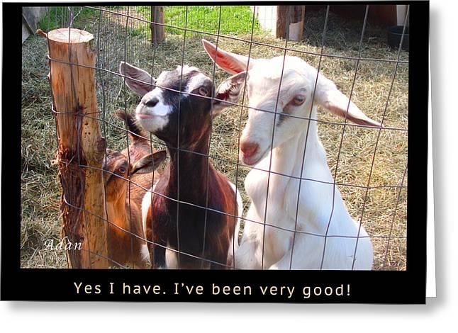 Goats Poster Greeting Card by Felipe Adan Lerma