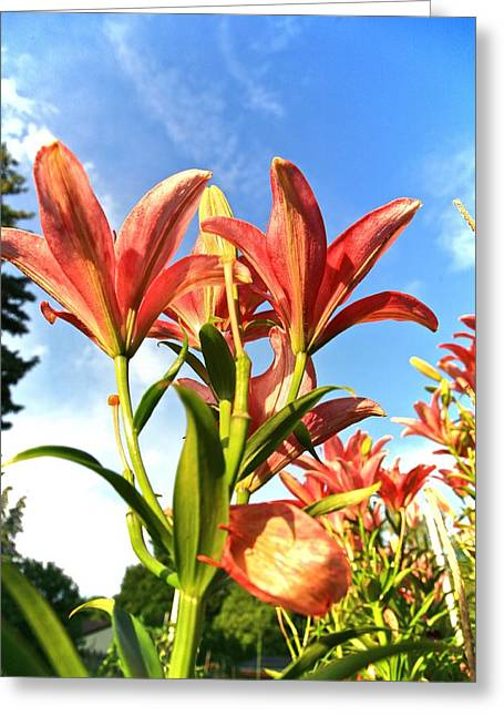 Flora Artwork Greeting Cards - Gods Creation-10 Greeting Card by Robert Pearson