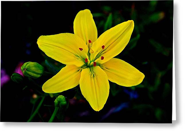 Flora Artwork Greeting Cards - Gods Creation-11 Greeting Card by Robert Pearson