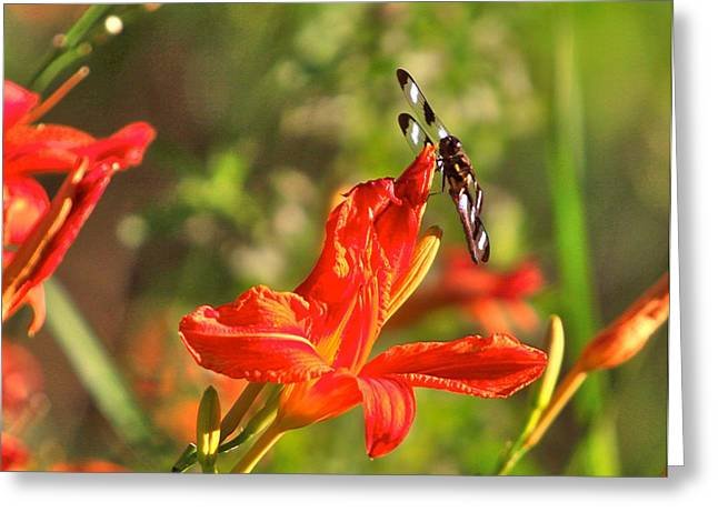 Flora Artwork Greeting Cards - Gods Creation-14 Greeting Card by Robert Pearson