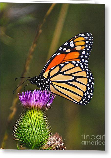Flower Artwork Greeting Cards - Gods Creation-16 Greeting Card by Robert Pearson