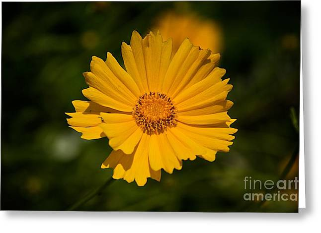 Flora Artwork Greeting Cards - Gods Creation-3 Greeting Card by Robert Pearson