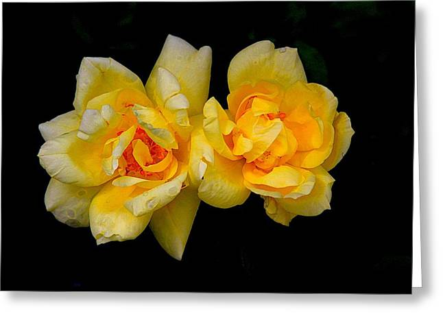 Flora Artwork Greeting Cards - Gods Creation-5 Greeting Card by Robert Pearson