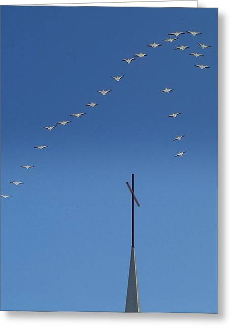 Reverence Greeting Cards - GODS Flock.. Greeting Card by Al  Swasey