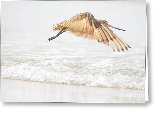 Ruth Jolly Greeting Cards - Godwit over the Ocean Greeting Card by Ruth Jolly