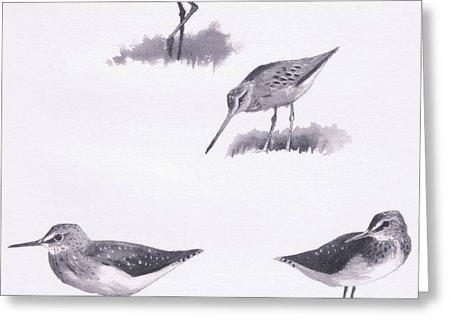 Godwits And Green Sandpipers Greeting Card by Archibald Thorburn