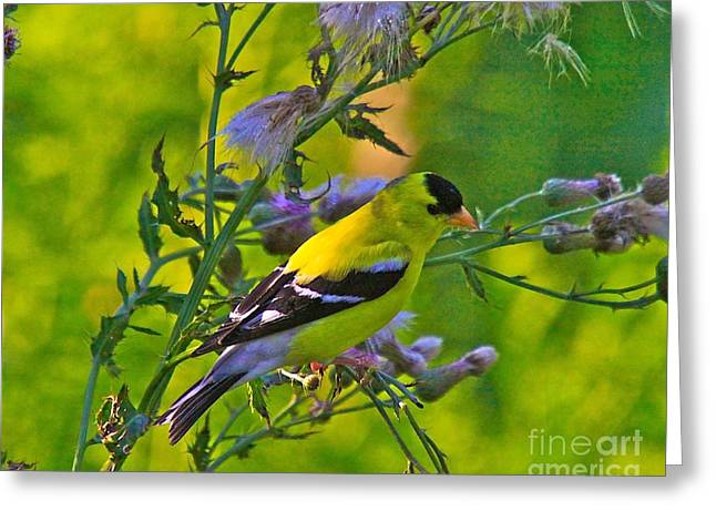 Bird Watcher Greeting Cards - Gold Finches-11 Greeting Card by Robert Pearson