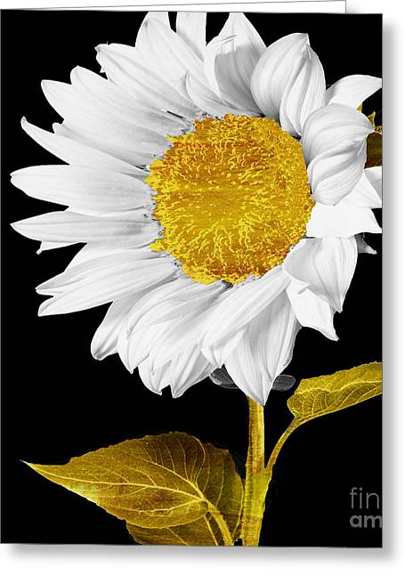 White Paintings Greeting Cards - Gold Hearted Greeting Card by Mindy Sommers