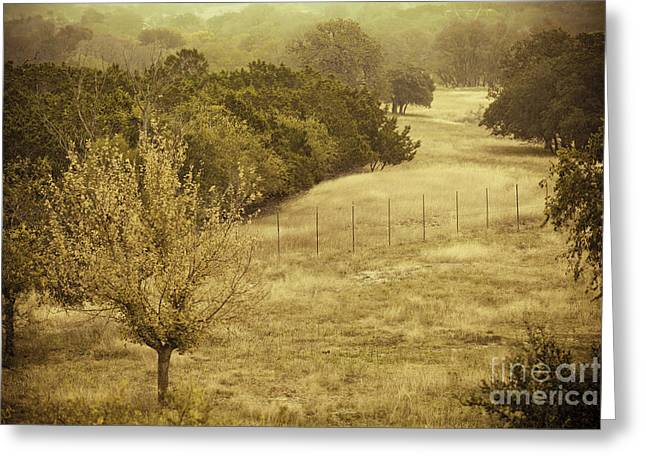 Texas Hill Country Landscape Greeting Cards - Gold Greeting Card by Katya Horner
