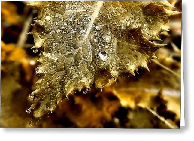 Drip Greeting Cards - Gold Leaf Greeting Card by Karen M Scovill