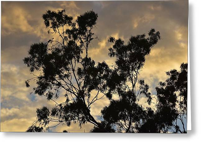 Gold Sunset Tree Silhouette I Greeting Card by Linda Brody