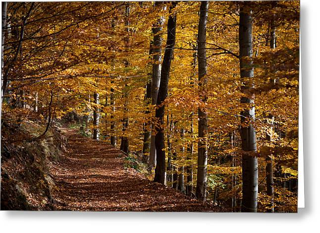 Wandern Greeting Cards - Golden Autumn Greeting Card by Andreas Levi