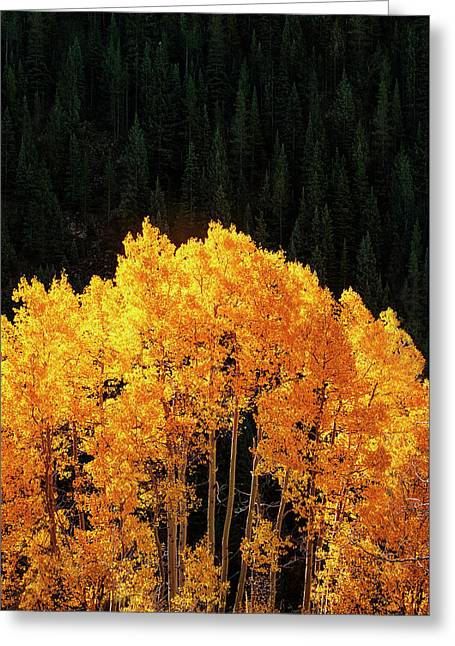 Golden Autumn Greeting Card by Andrew Soundarajan