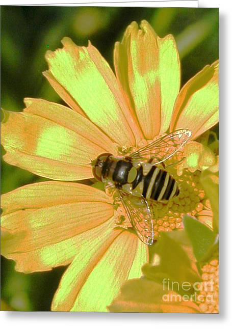 Golden Bee Greeting Card by Karol Livote