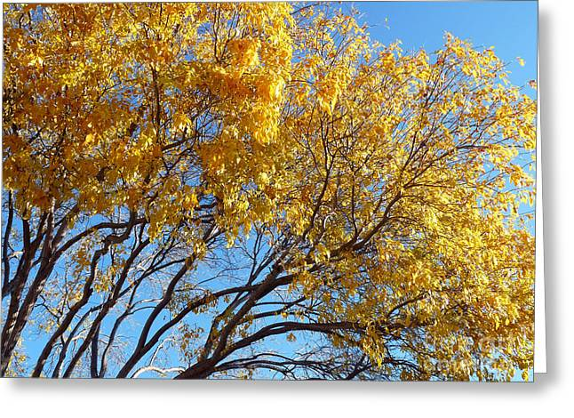 Turning Leaves Mixed Media Greeting Cards - Golden Boughs Greeting Card by Rhonda Chase