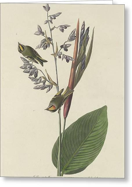 Thrush Greeting Cards - Golden-Crested Wren Greeting Card by John James Audubon