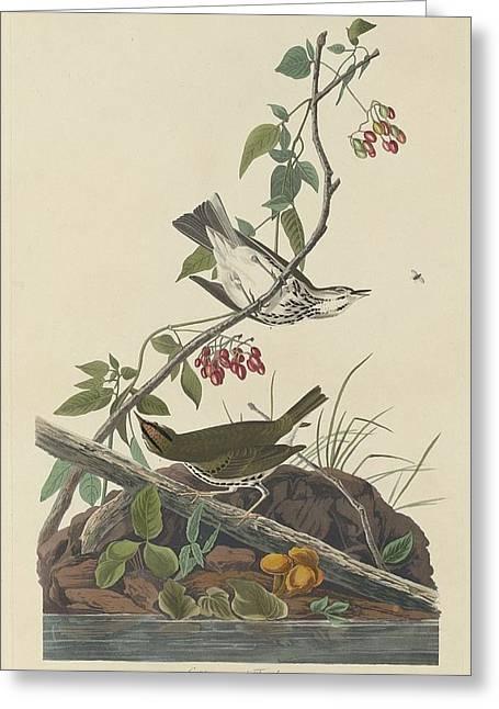 Thrush Greeting Cards - Golden-Crowned Thrush Greeting Card by John James Audubon