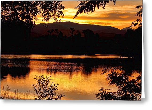 Gold Stock Greeting Cards - Golden Day at the Lake Greeting Card by James BO  Insogna