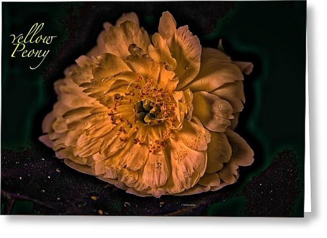 Golden Greeting Card by Dennis Baswell