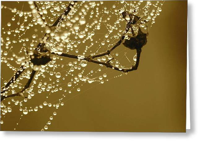 Dewdrops Greeting Cards - Golden Dewdrops Greeting Card by Carol Groenen
