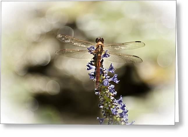 Florida Flowers Digital Greeting Cards - Golden Dragonfly Greeting Card by Carolyn Marshall